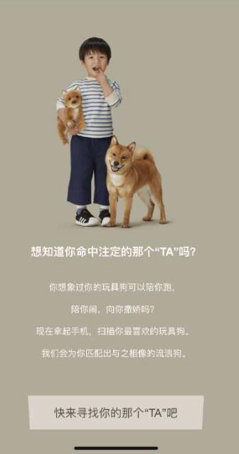 滴露:玩具狗匹配宠物狗
